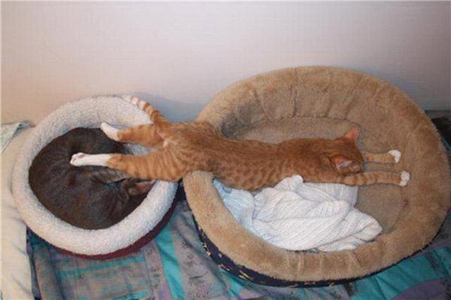 awkward-cat-sleeping-positions27