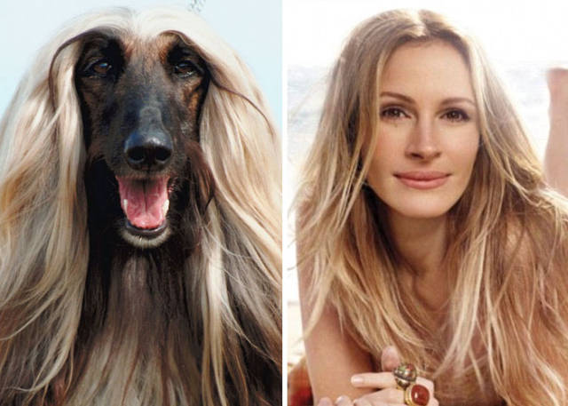celebs_and_their_strikingly_similar_animal_doppelgangers_640_50
