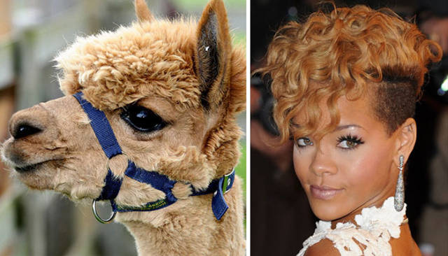 celebs_and_their_strikingly_similar_animal_doppelgangers_640_54