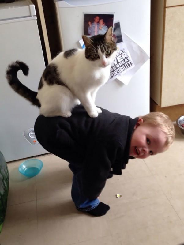 catback1