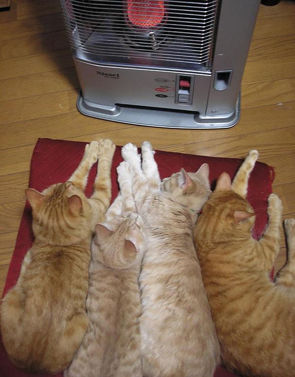 cats-enjoying-warmth-48__605