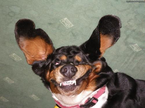 upside-down-dog-9