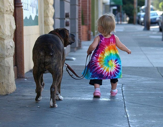 walkingbigdog1