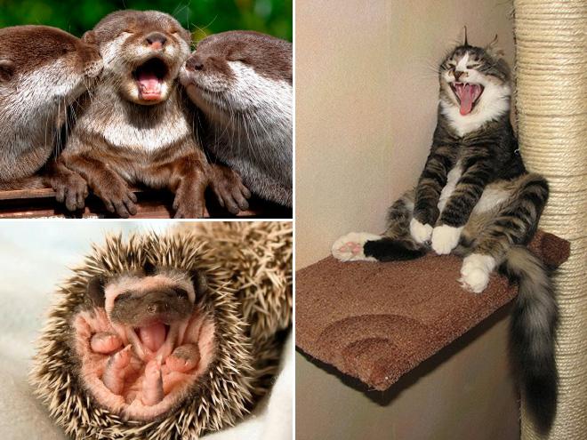 yawn13