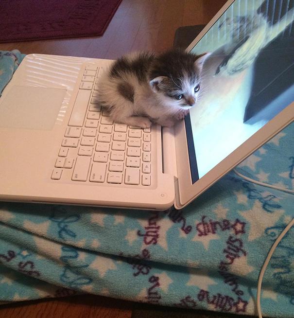 cats-enjoying-warmth-44__605