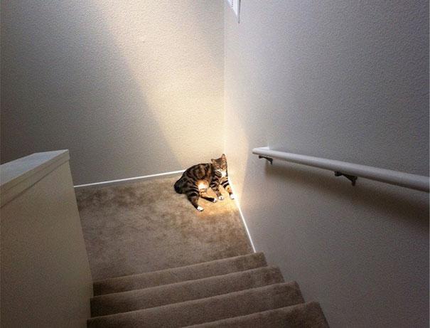 cats-enjoying-warmth-46__605