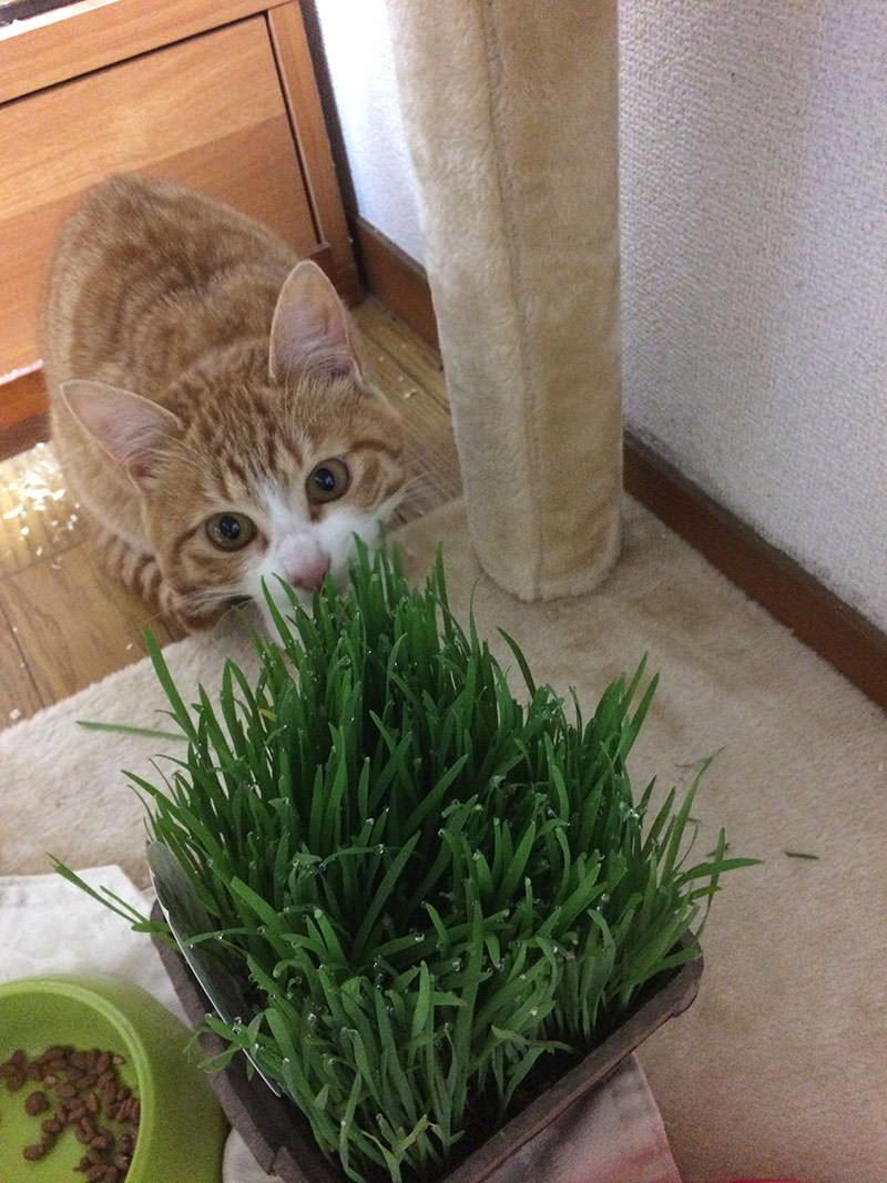 何だ、この草?食べていいの?