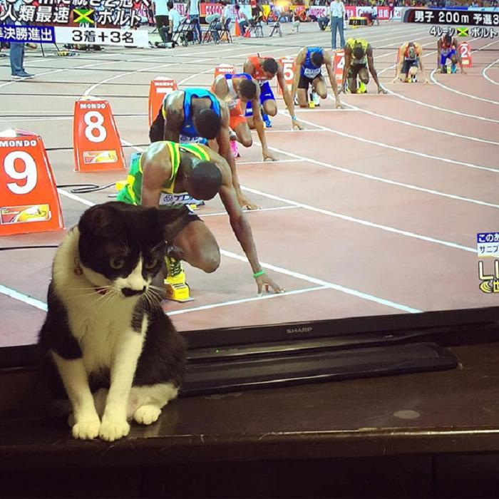 タイミングバッチリで撮影出来たネコさんの奇跡の写真10選-3