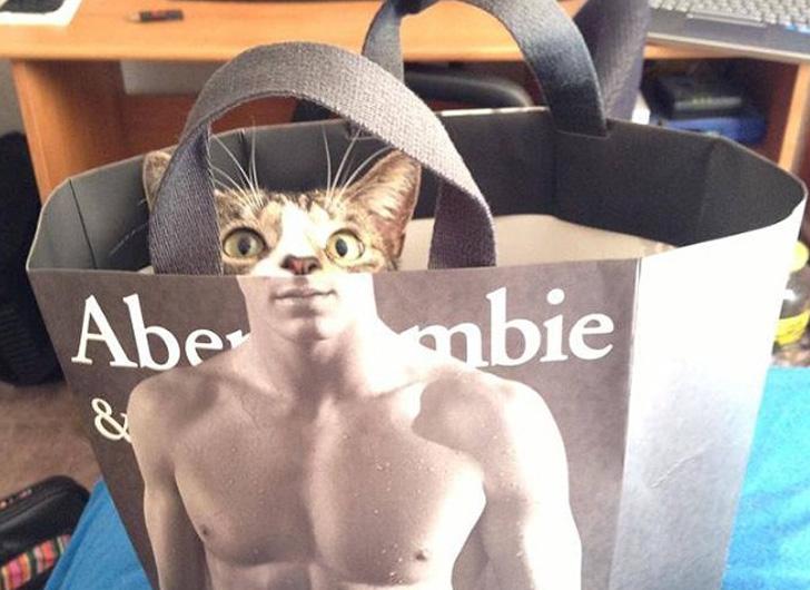 タイミングバッチリで撮影出来たネコさんの奇跡の写真10選-2