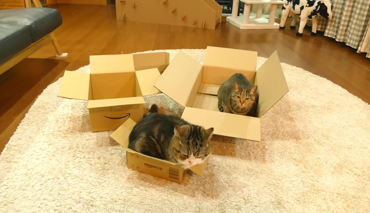 選んだのは小さい箱でした