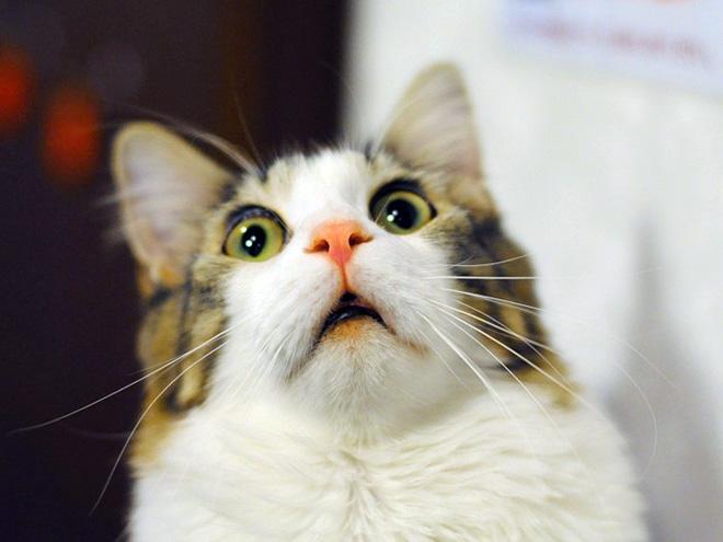 drama-cat2