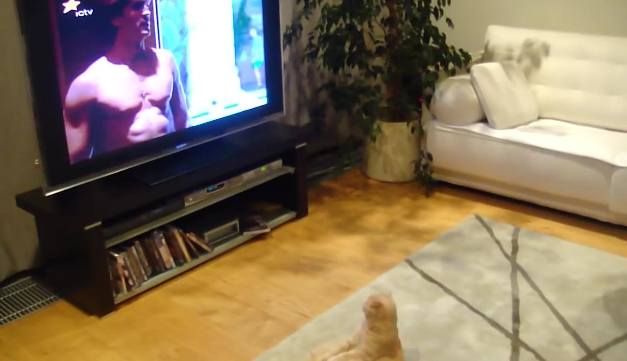 テレビでも観ようか