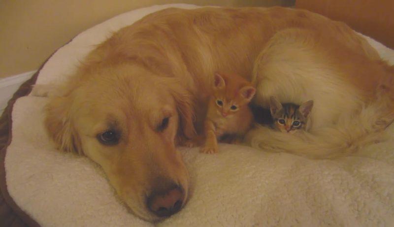 01仲良しのわんちゃんのしっぽにくるまってるネコさんがとっても幸せそう♪