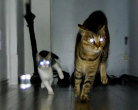 042匹のネコさんタッグが贈るふしぎと元気の出るエンターテイメント!
