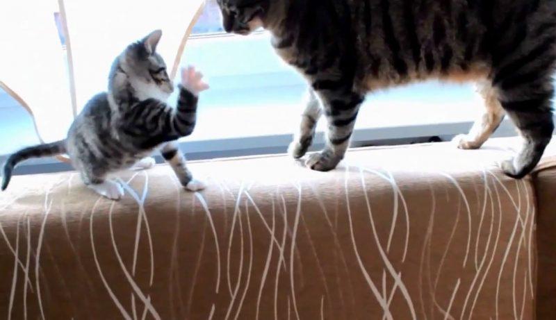 02両者一歩も譲らない!しっぽで遊びたい子ネコさんといい加減ゆっくりさせてほしいネコさんとの攻防戦がおもしろすぎる(笑)