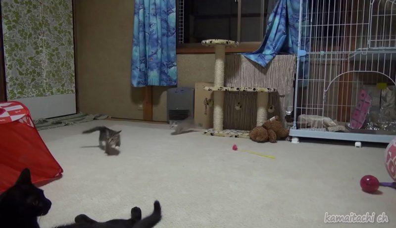 01「ず~と見ていたくなる♪」縦横無尽に駆け巡っている元気すぎる子ネコさんたちをついつい目で追ってしまう!