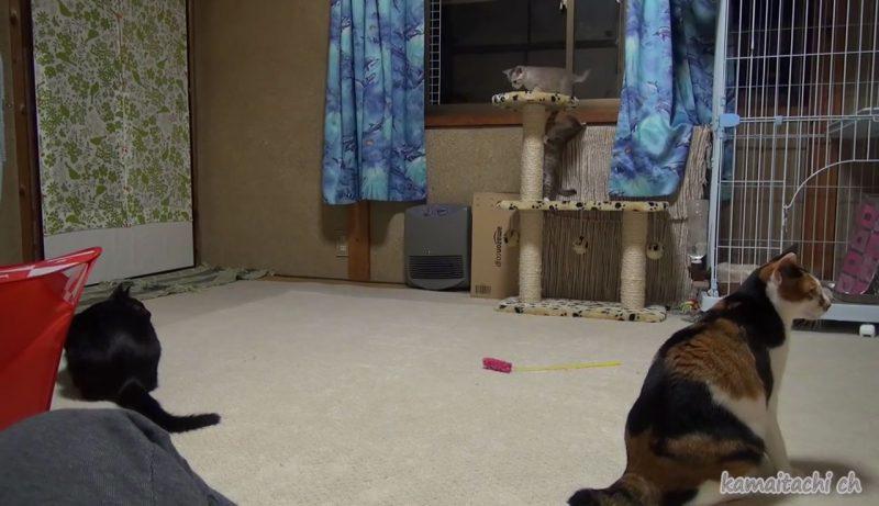 02「ず~と見ていたくなる♪」縦横無尽に駆け巡っている元気すぎる子ネコさんたちをついつい目で追ってしまう!