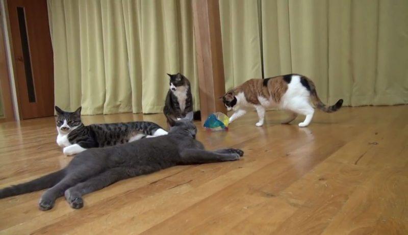 01たいへんだぁー(゜□゜)Σ!!雷にびっくりしたネコさんが驚くべき瞬発力で逃げていく!!