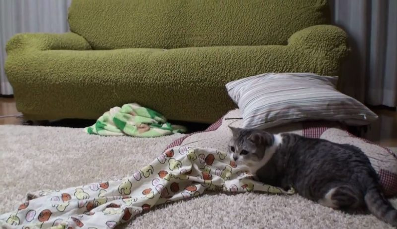 04「で、でてくれない(汗)」パジャマのズボンからネコをだす方法に思わず納得♪