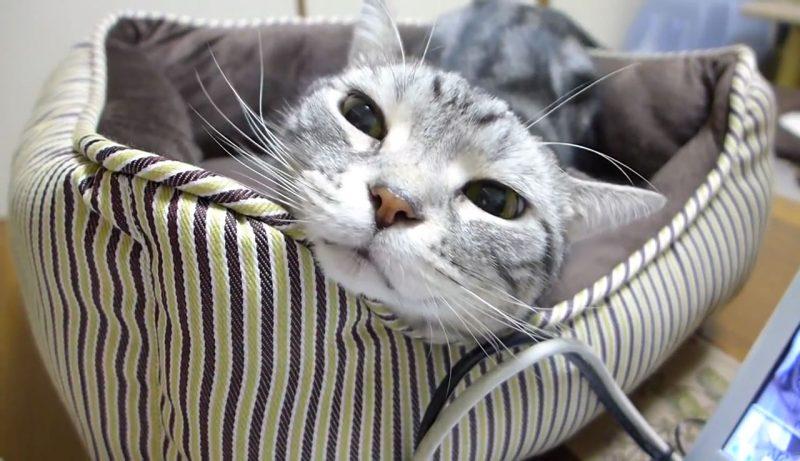 01「天国だにゃぁ~」ブラシするよ~の声にすっとんでいくネコさんのご満悦そうな表情がGOOD!