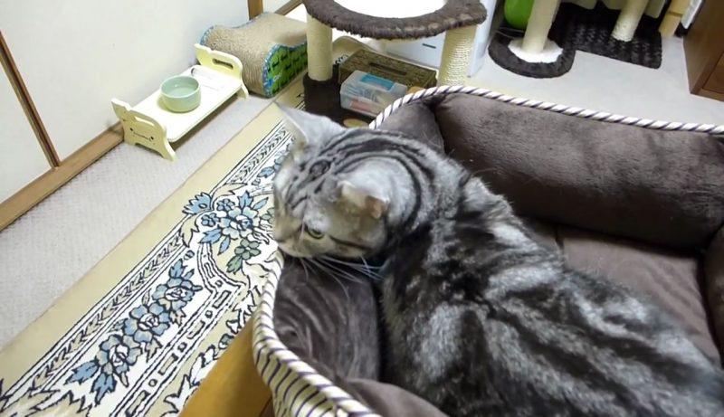 02「天国だにゃぁ~」ブラシするよ~の声にすっとんでいくネコさんのご満悦そうな表情がGOOD!