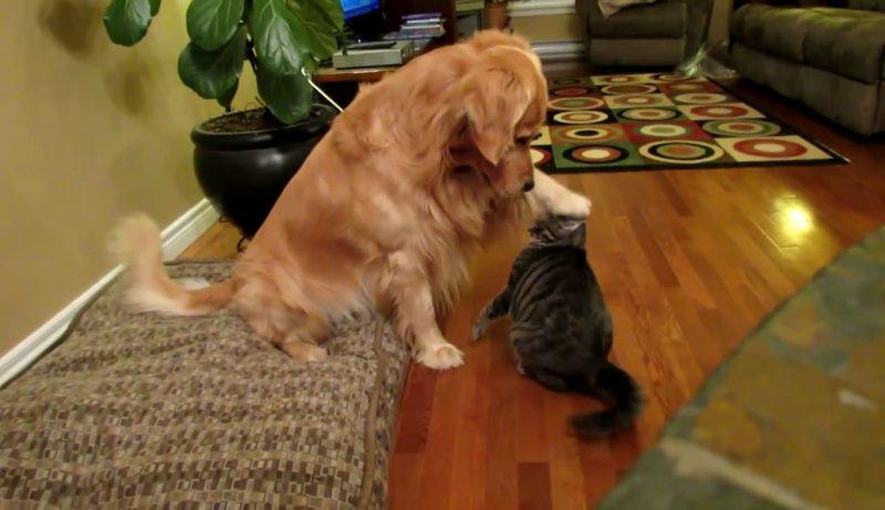 02「スキ・・・(ぎゅー)」まるで恋人!18秒でキュンとしちゃうネコさんとイヌさんのロマンスムービー♪