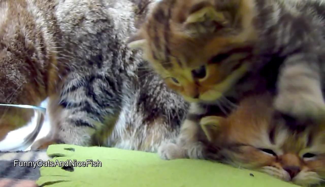 03-ネムネム・・・とっても眠い子ネコさん他の子ネコに何をされてもグッスリお寝んね中♪