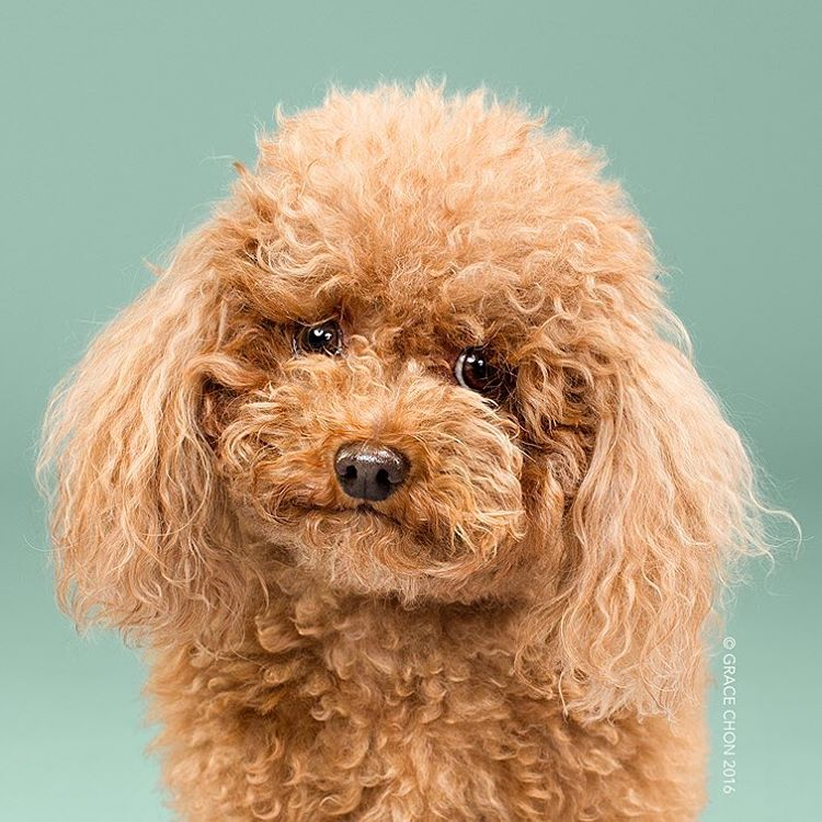 dog-grooming-photography-2