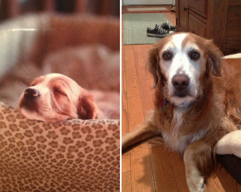 dogs-before-and-after-24__880