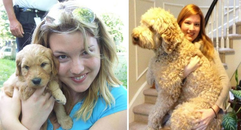 dogs-before-and-after-26__880