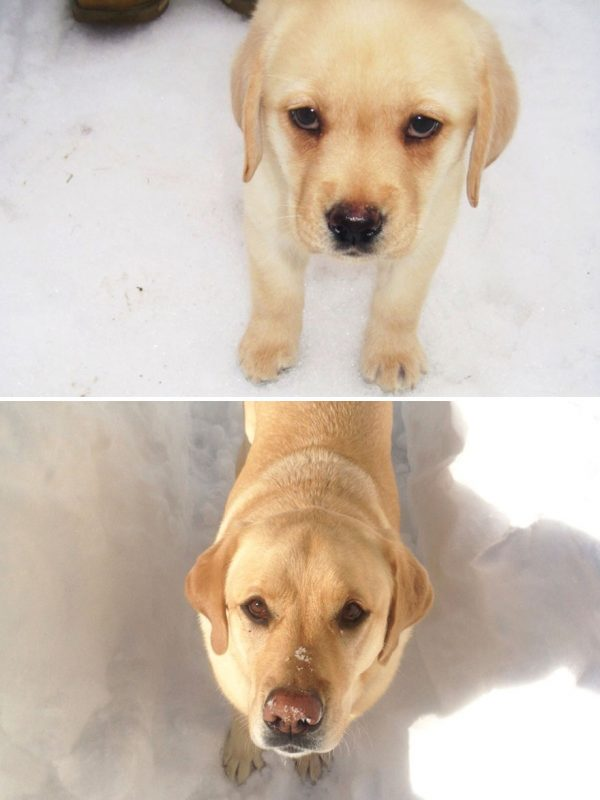 dogs-before-and-after-341__880
