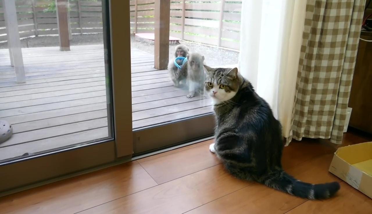 庭に何かいるよ