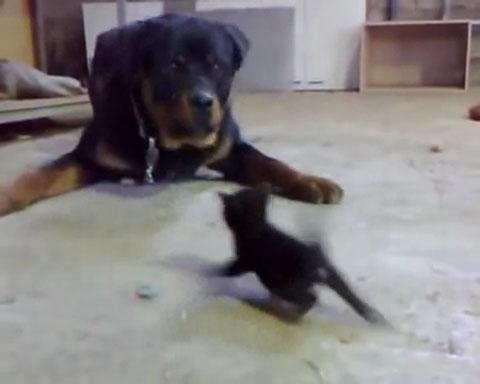 02「前世は英雄!!」圧倒的な体格差にもかかわらず果敢に立ち向かう小さな黒ネコさんがかっこいい!!