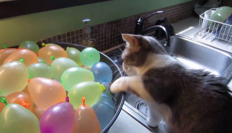 02「これなんだろお~??」好奇心のまま水風船をさわっているとはじけちゃってびっくり!