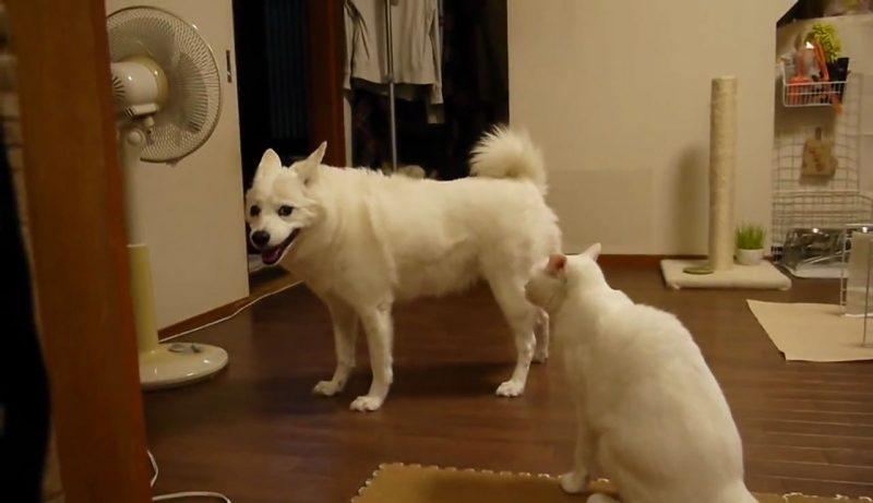 01イヌさんに文句を言うネコさん!しかしイヌさんは聞く耳を持たず・・・。大激怒するネコさんに取ったイヌさんの行動とは??