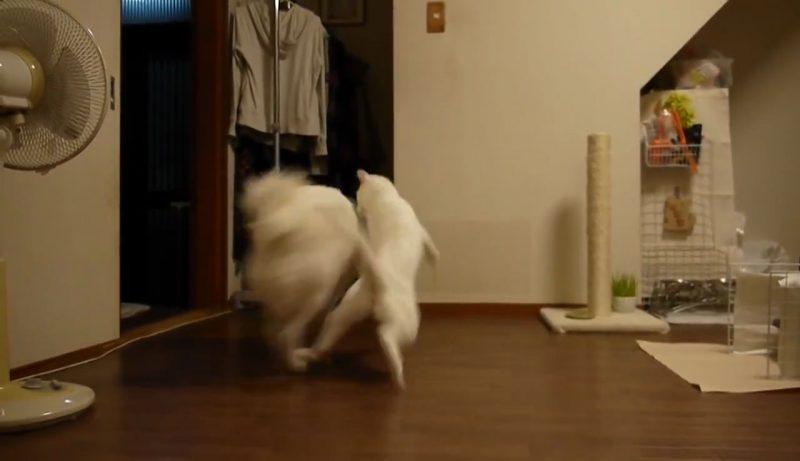 03イヌさんに文句を言うネコさん!しかしイヌさんは聞く耳を持たず・・・。大激怒するネコさんに取ったイヌさんの行動とは??