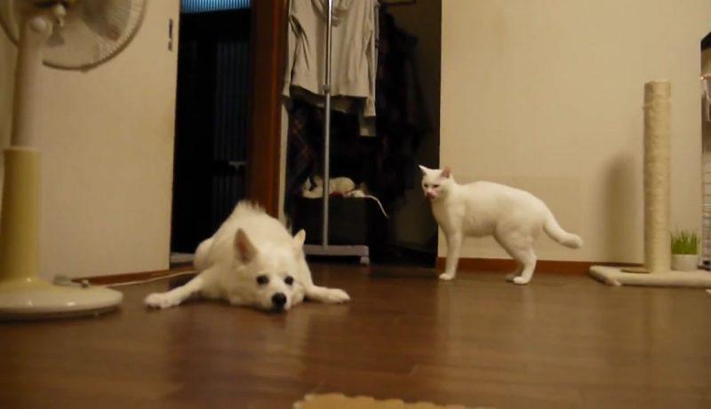 04イヌさんに文句を言うネコさん!しかしイヌさんは聞く耳を持たず・・・。大激怒するネコさんに取ったイヌさんの行動とは??