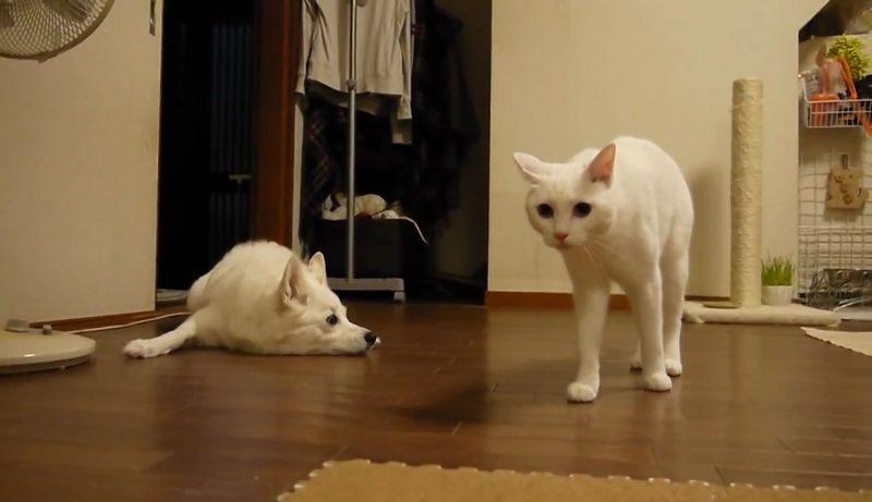 05イヌさんに文句を言うネコさん!しかしワンちゃんは聞く耳を持たず・・・。大激怒するネコさんに取ったワンちゃんの行動とは??