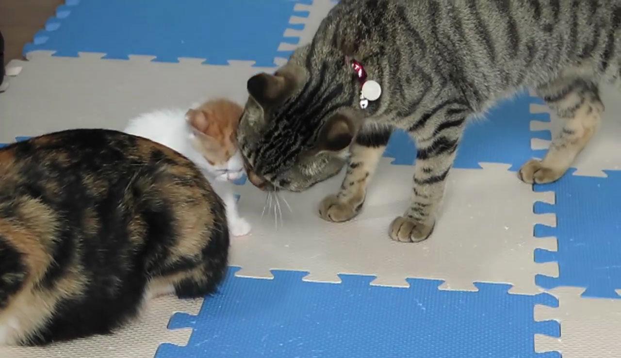 04愛は地球を救う!孫が可愛くてしょうがないネコさんのスキンシップが等身大すぎてもはや尊敬の域!