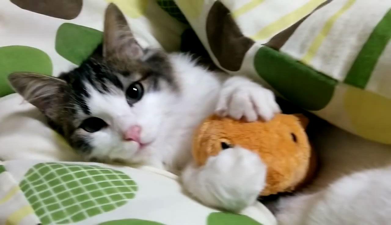 03「ねぇ~遊ぼうよ~」本気で眠たいネコさんにちょっかいを出す遊び足りない子ネコさんにときめきを感じる!