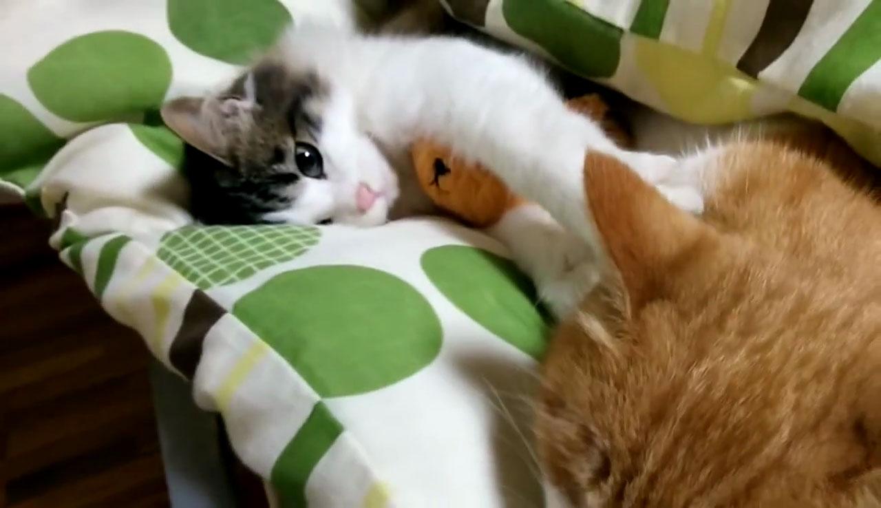 04「ねぇ~遊ぼうよ~」本気で眠たいネコさんにちょっかいを出す遊び足りない子ネコさんにときめきを感じる!