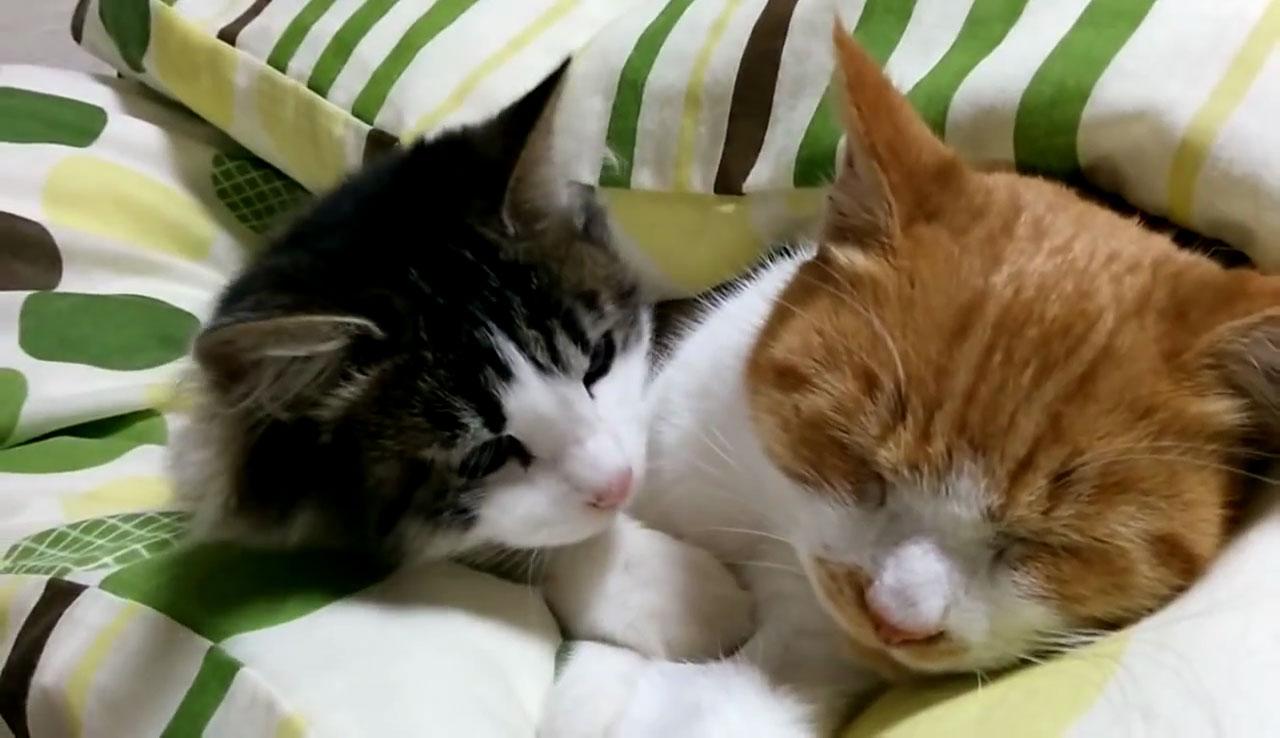 05「ねぇ~遊ぼうよ~」本気で眠たいネコさんにちょっかいを出す遊び足りない子ネコさんにときめきを感じる!