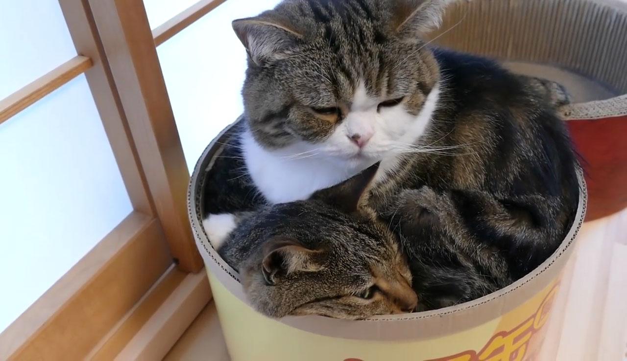 01「さすがにこれはやり過ぎたにゃ(汗)」箱に入ったネコさん!完全なキャパオーバーっぷりに思わず声をかけたくなる!