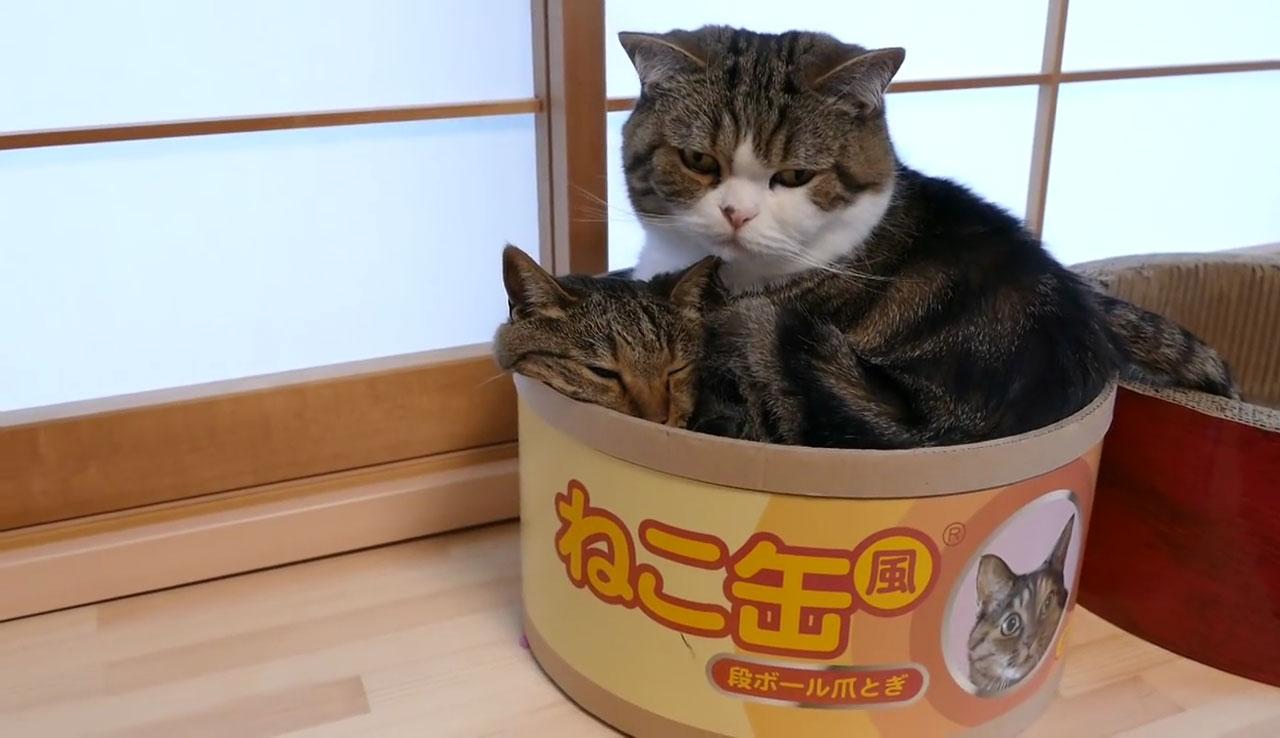 03「さすがにこれはやり過ぎたにゃ(汗)」箱に入ったネコさん!完全なキャパオーバーっぷりに思わず声をかけたくなる!