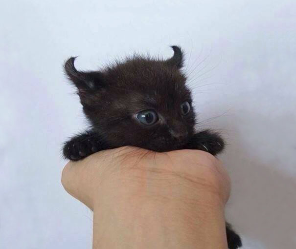 cute-kittens-11-57b30aa95f3c6__605