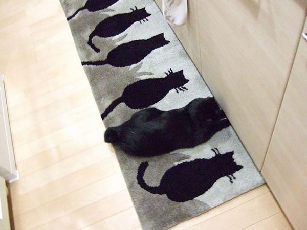 あなたは見破ることができるか!?ネコさんの巧みな隠れみの術15枚!04