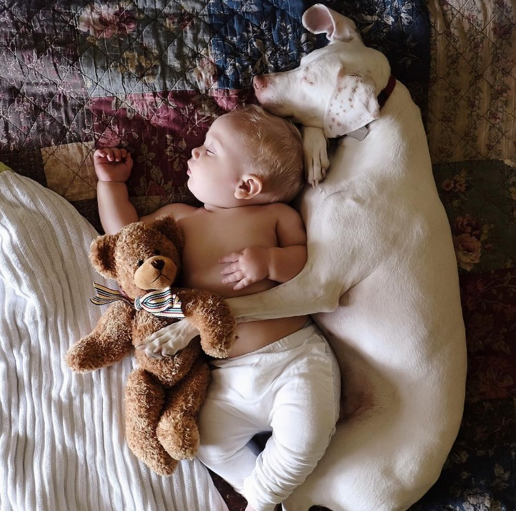 22-adorable-animals-living-their-best-lives-while-cuddling