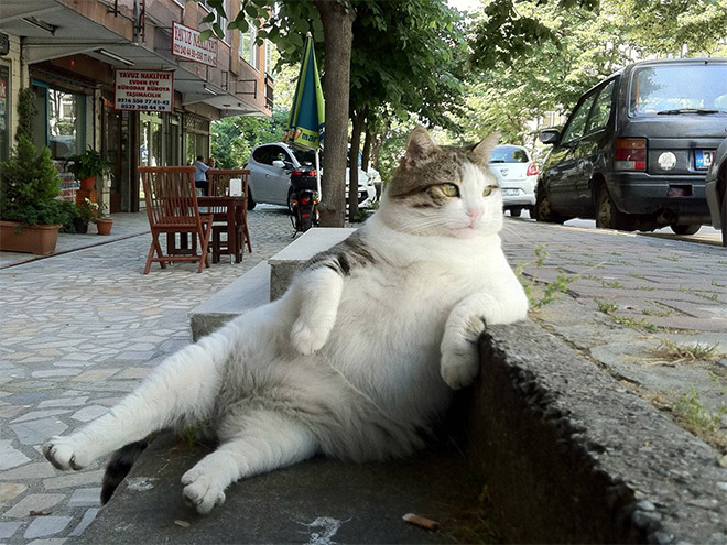 famous-cat1