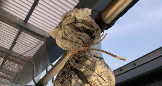 アシナガバチに巣を作らせない方法として成功したのはこれ