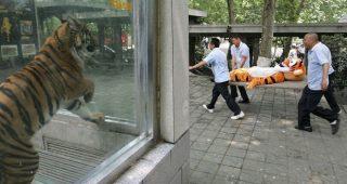 日本の動物園の動物が逃げた時の訓練が海外メディアで話題に「日本よ・・それじゃダメじゃないか?w」
